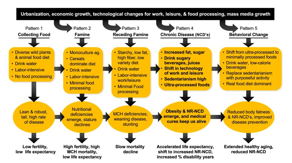 Nutrition Transition Diagram
